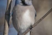 Ptáci - Birds / Ptáci - Birds
