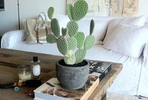 Succulents / cactus at home / Sukulenty. Kaktusy. W doniczkach.