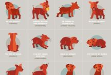 Animals important info
