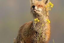 Foxy Fox / by Nick Goodenough