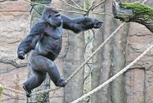 Animales - Primates