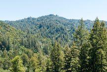 Santa Cruz Nature / Nature around our partnered farms in Santa Cruz, California.