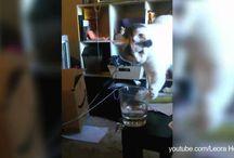 Funny Cat Videos / by Tamye Machina