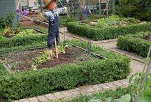Veg garden Poulton