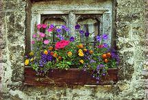 Virágos ablakláda - window box