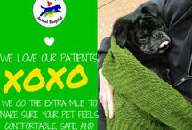 Our wonderful Pet Patients / We love our cute cuddly patients!!! Our sweet patients that come in for excellent veterinary care at our Veterinary Hospital/Veterinary Clinic in Grosse Pointe/Detroit and the surrounding areas of Michigan! We do everything from vaccines to major surgery making sure your pet is comfortable and happy every step of the way!
