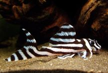 Aquarium Fishies
