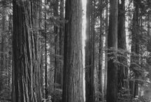 Tour up the Redwood Highway / Vintage pictures and brochures featuring places in Northern California, Humboldt County.