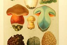 Biological Illustration / by Corianne Wilson