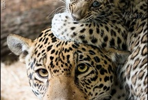 Cute Animals to look at ...