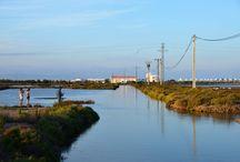 Ebro Delta Tarragona / Het op een na grootste rijstgebied in Spanje ligt in de Catalaanse provincie Tarragona (Terresdelebre) en is een meer dan bijzonder natuurgebied vol vogels, groene velden en ruige stranden.