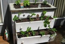 Spring in the air: Garden Inspirations / Spring is all about new life -- and so is upcycling. These are great ideas for helping your garden grow.