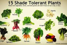 shade loving plants and vegetables