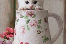 Yavru kediler / Tatlılar