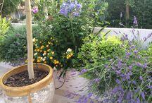 Min syd franske have, mit lille paradis / Egne billeder fra mit lille paradis ❤️