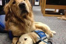 Puppies on puppies! / We ❤ puppies