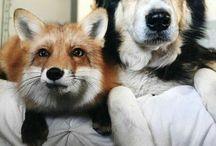 zvieraci kamaráti