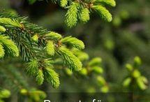 Natur  Gesundheit