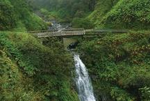 Maui / by karlene evans