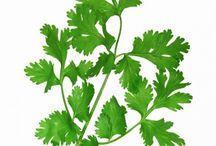 Herbs / What herb is that , what doe it look like? Taste like?
