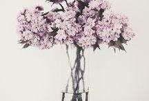 bring me flowers / by bebe .