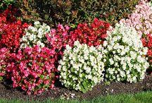 Jardins / Découvrez nos meilleurs astuces de jardinage pour une belle cour fleurie et des délicieux fruits et légumes frais en un rien de temps.
