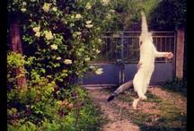 [• cats •]