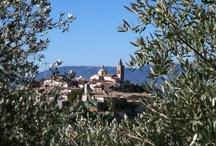 Trevi Umbria...nel cuore dell'Italia...the green heart of Umbria extravirgin olive oil Flaminio town / #Trevi is NOT just a fountain in Rome, it's also a beautiful hillside town of in #Umbria!   #Trevi, #umbria #italy dove l'olivo non è solo leggenda: è storia. Secondo la tradizione Sant'Emiliano, Santo patrono e protettore della nostra città di Trevi, più di 1700 anni fa fu legato ed ucciso a Trevi, durante le persecuzioni dei cristiani proclamate dall'Imperatore Diocleziano, ad una pianta di olivo. Ancora oggi quest'olivo, detto di Sant'Emiliano produce olive!