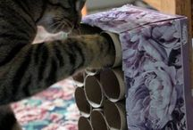 Animal Enrichment, DIY Projects