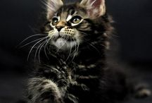 Adorable cats & kittens