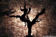 Wines & Spirits - Vinos y Licores
