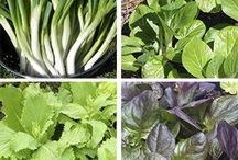 Quick growing vege