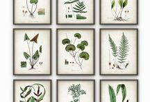 Botanica grønt nordisk moderne