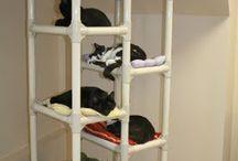 gatti strutture