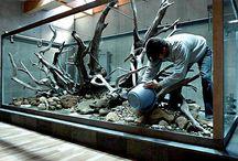 aquarium. / inšpi pre rybičky