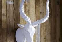 Horns I want / by The Pampered Artist Andrea May