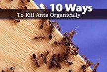 Garden ~ Pest Control / by Organic Gardens Network™