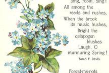Forget-me-not garden