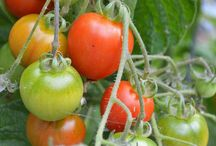 Home Farmer / Great resources for home farmers, urban gardeners, and personal landscapers