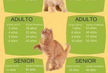 Edades Del Gato