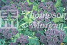 Trädgård - Odling - grönsaker