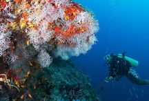 Underwater World / Underwater world