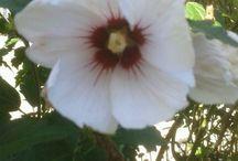 flowers ^_^