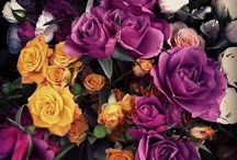 Favourite flora