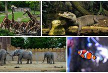 Berlin Fotografie - Landschaft - Tiere - Onlineshops / Bilder und Fotografie von Berlin - Mehr auf meinem Blog.