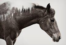 Wild and horses