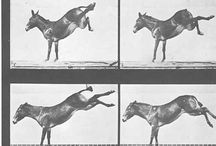 Рисунок и фото лошадей. Picture and photo of horses.