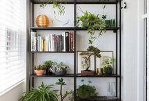 Shelf obsession