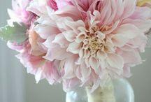 Blomster og farver