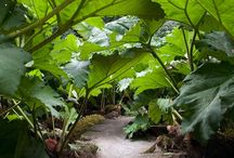 jardin exotique / by Adrien Biscarat